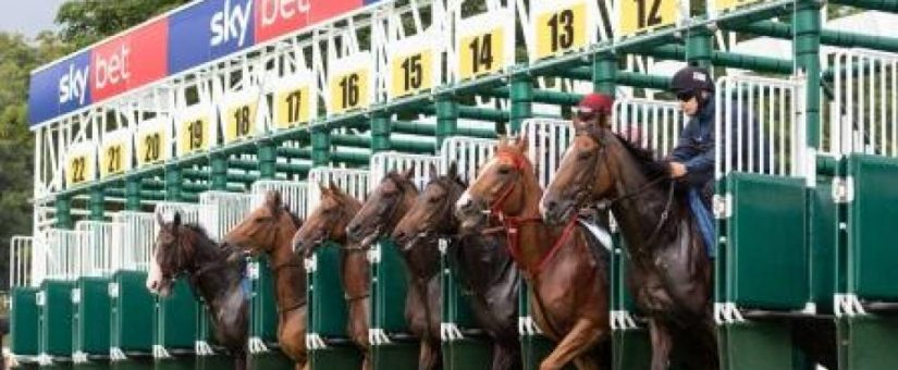 How do I select the best starting gate for my race track?