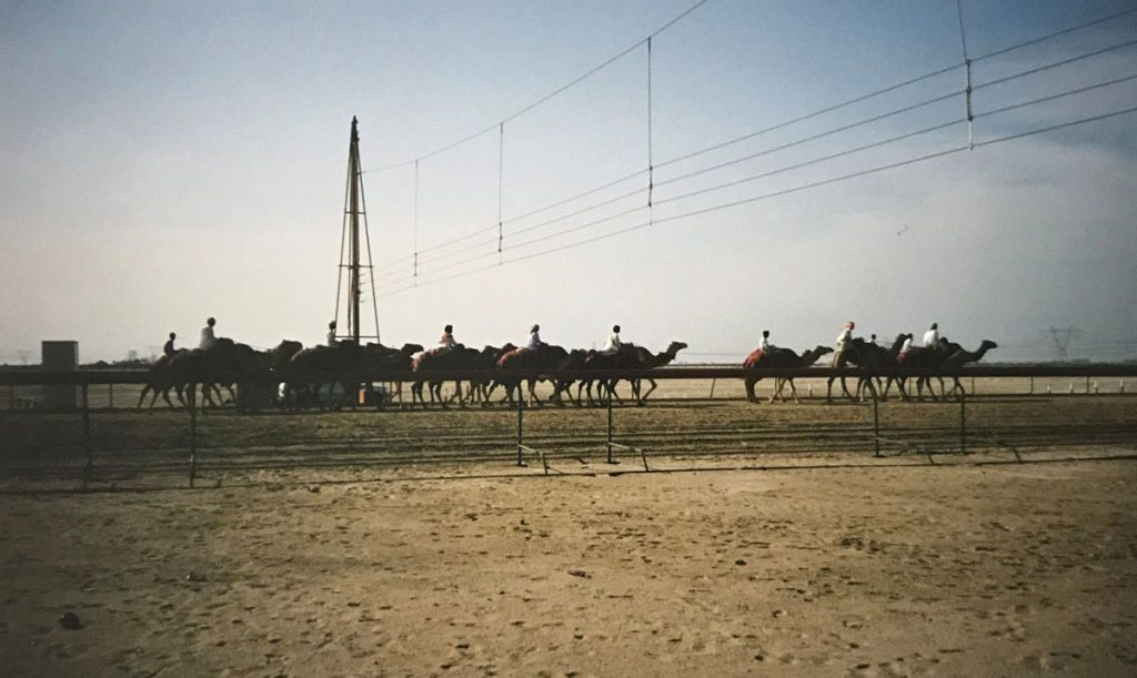 Camel gates designed and sold into the Middle East